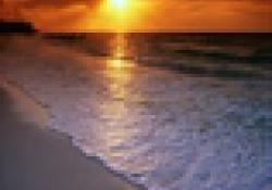 CURSO ONLINE: Abordaje de los efectos psicológicos producidos por la COVID-19 mediante mindfulness