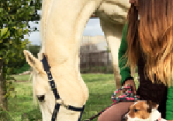 CURS: Teràpia assistida amb cavalls i cans