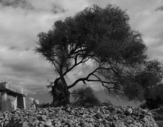 Mindfulness de Menorca